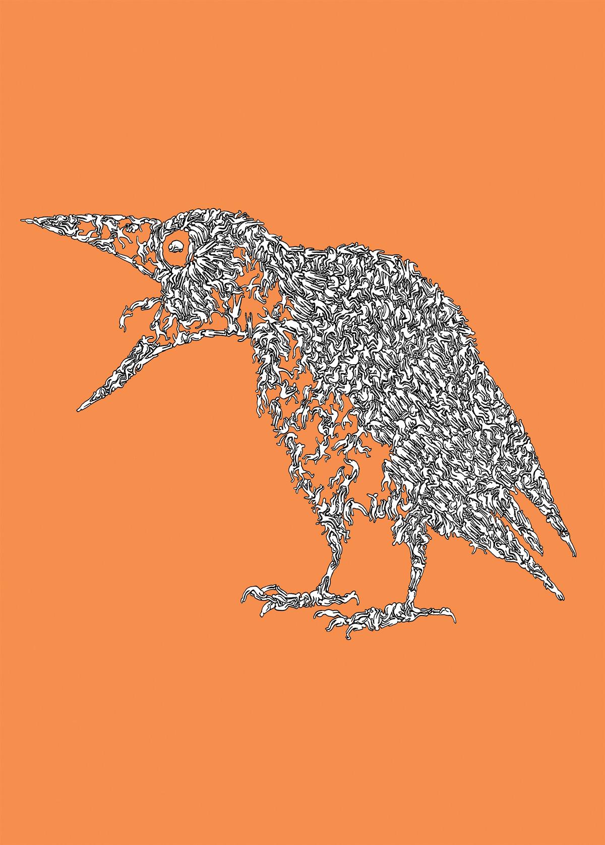 crow804-c1200